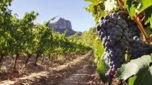 enero30-viñedos
